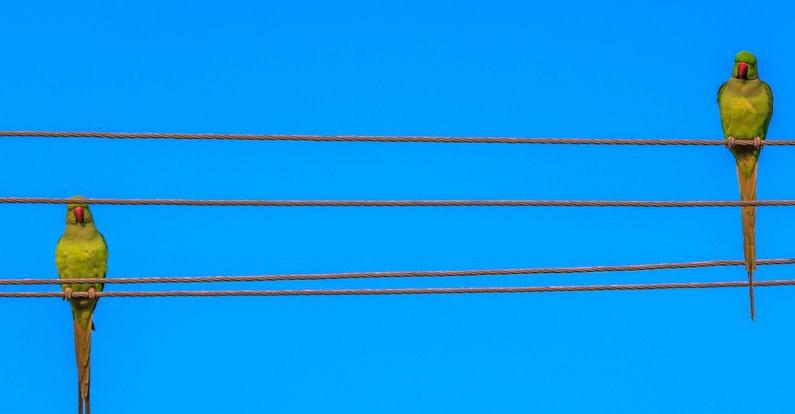 Elektroprovodka-doma-002