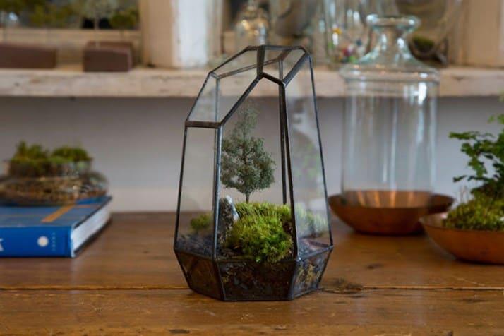 Террариум для растений и цветов