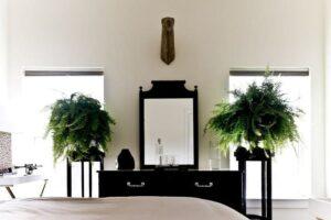 8 комнатных растений, которые должны быть в вашем доме