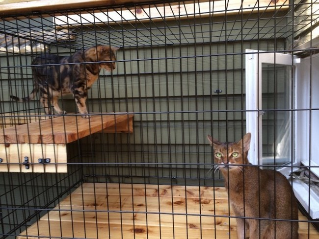 patio-for-cats-03