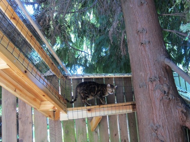 patio-for-cats-06
