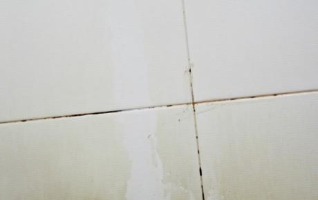 плесень на плитке в ванной